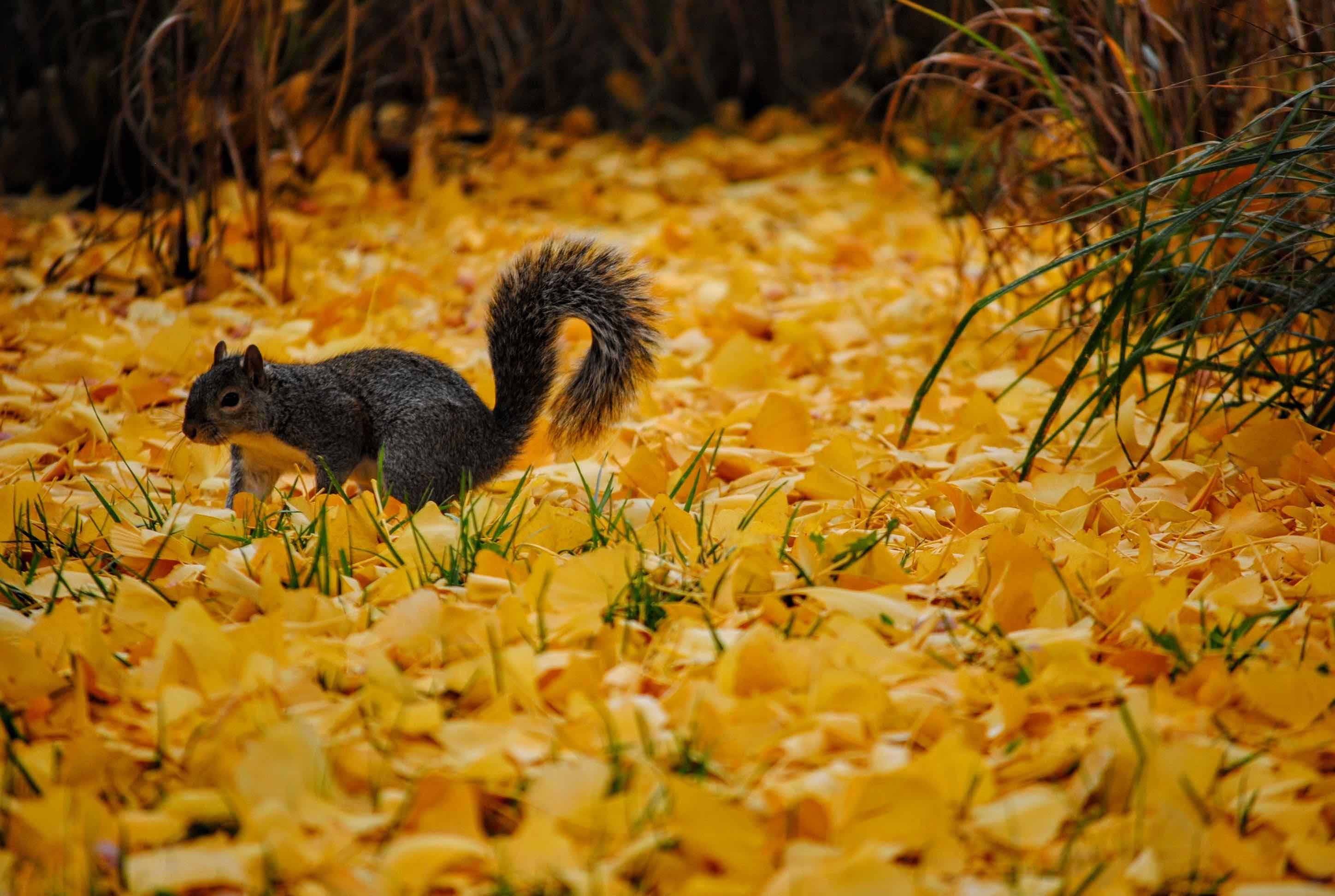 5 Lessons From a Squirrel